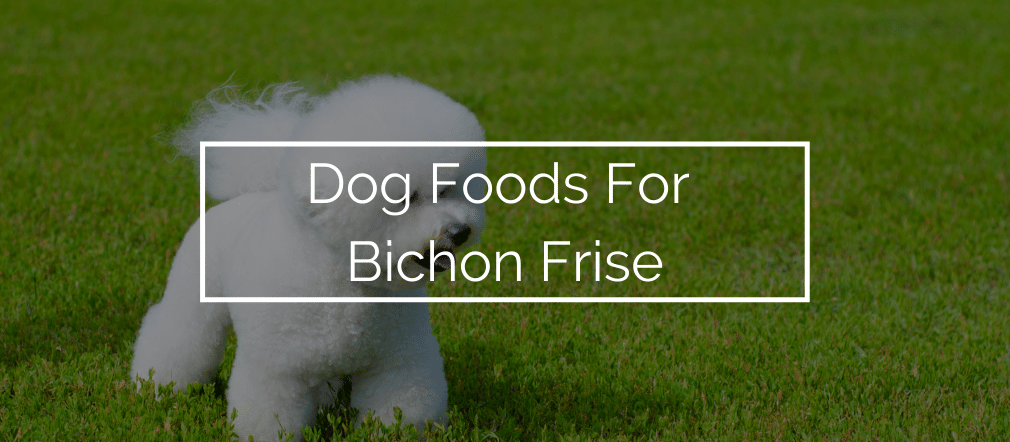 Dog Foods For Bichon Frise