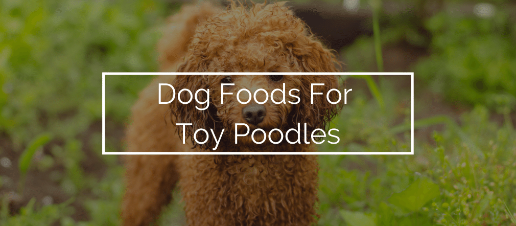 Dog Foods For Toy Poodles
