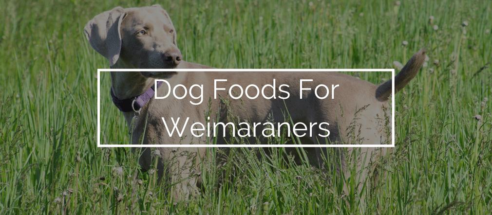 Dog Foods For Weimaraners