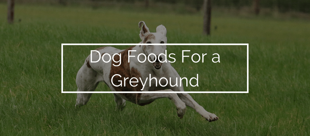 Dog Foods For a Greyhound