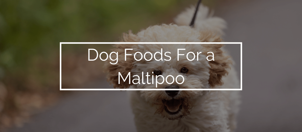 Dog Foods For a Maltipoo