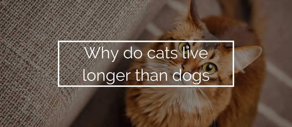 Why do cats live longer than dogs