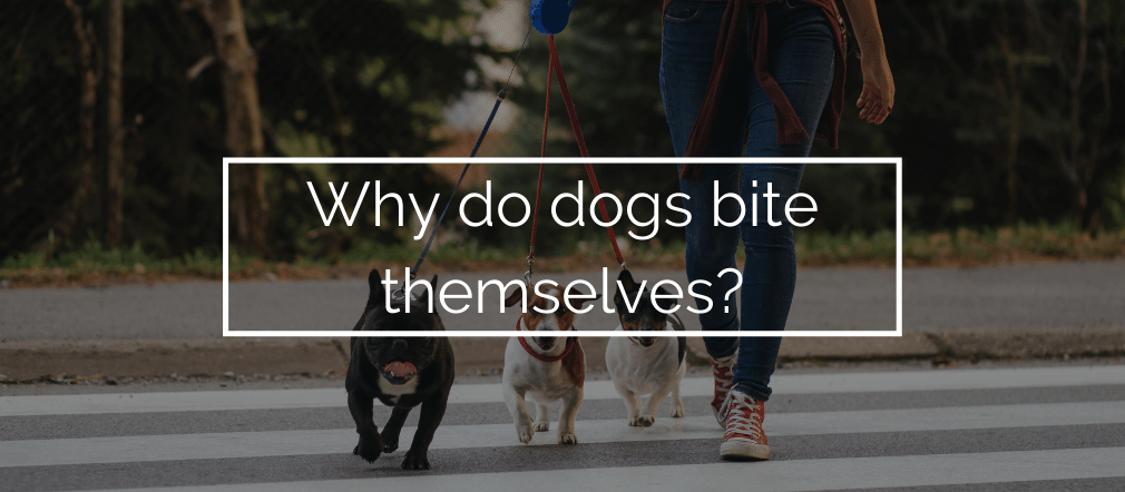why do dogs bite themselves