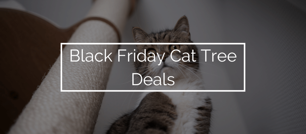 Black Friday Cat Tree Deals