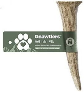 Gnawtlers - Premium Elk Antlers for Dogs chew toy