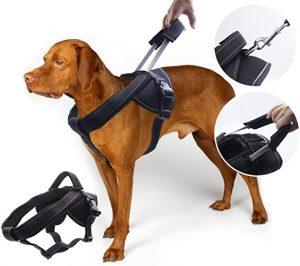 chew proof dog harness