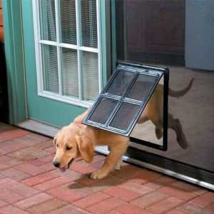 dog proof racoon trap