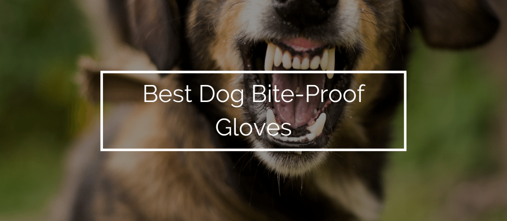 Best Dog Bite-Proof Gloves