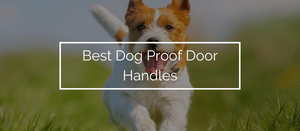 Best Dog Proof Door Handles