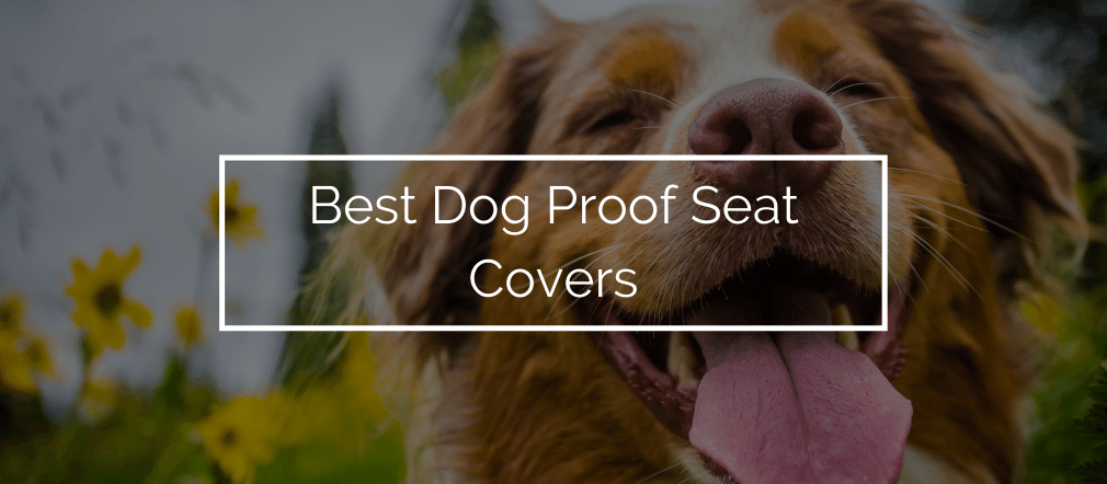Best Dog Proof Seat Covers
