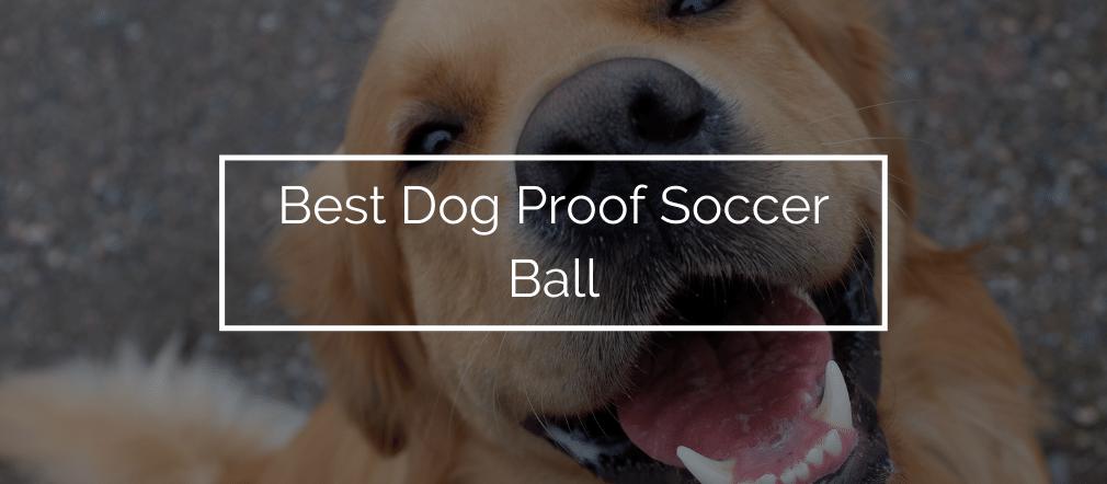 Best Dog Proof Soccer Ball