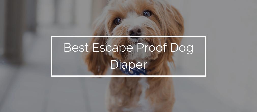 Best Escape Proof Dog Diaper