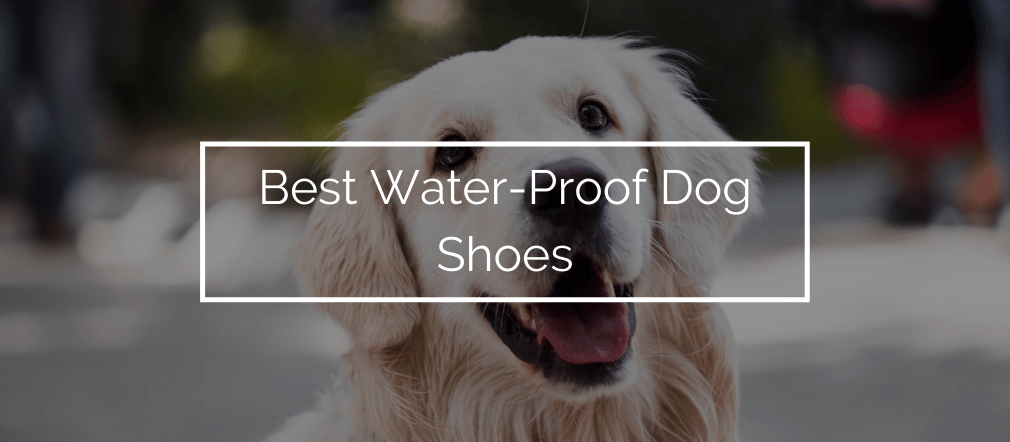 Best Water-Proof Dog Shoes
